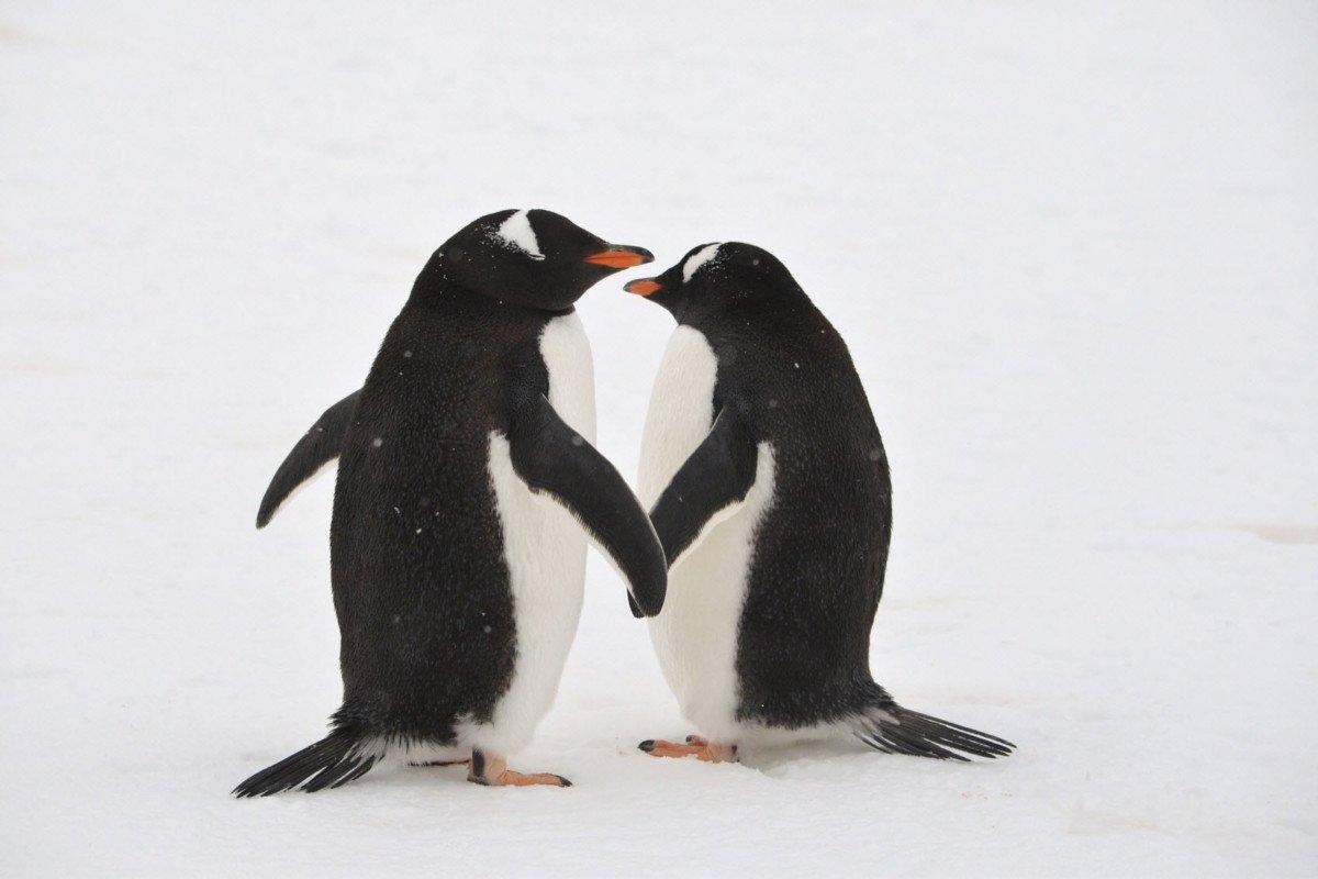 Google Penguin is Now Your Friend