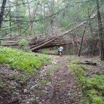 Camptown Races Trail